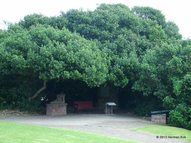 Mossel Bay post tree