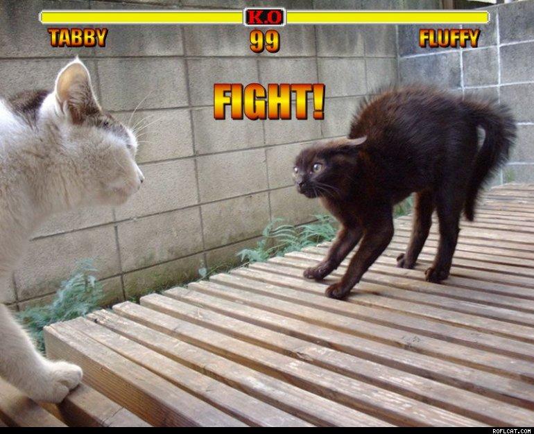Cat fight round one