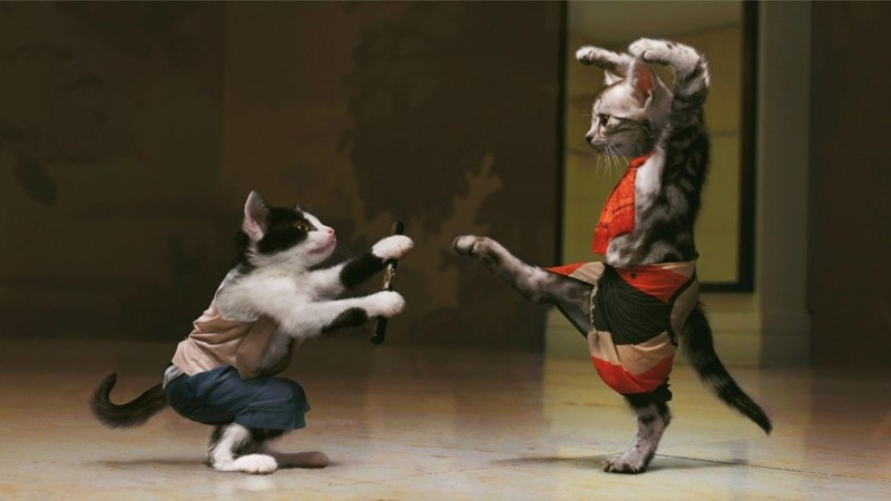 Funny-Animal-Cat-Fight-800x450