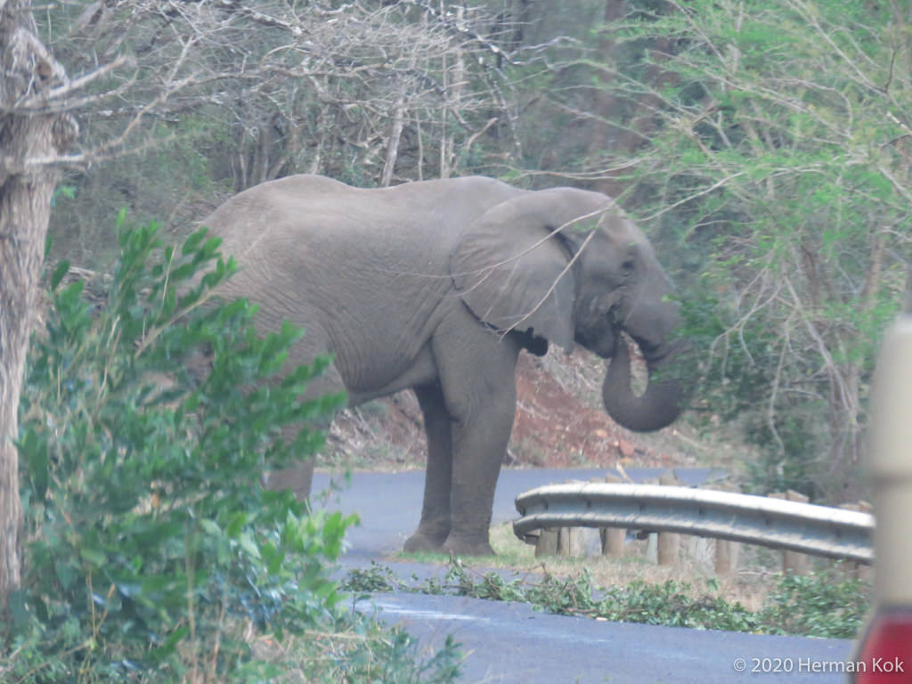Elephant eating in the road
